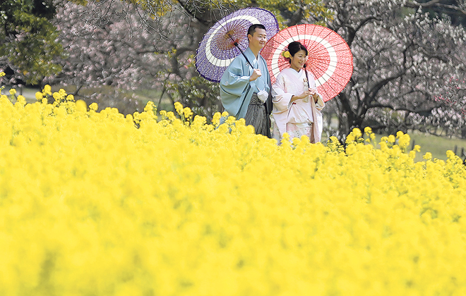 ASSOCIATED PRESSA couple in traditional wedding kimono posed for photographs Tuesday amid the golden rape blossoms in a field at Hama­ri­kyu Gardens in Tokyo.